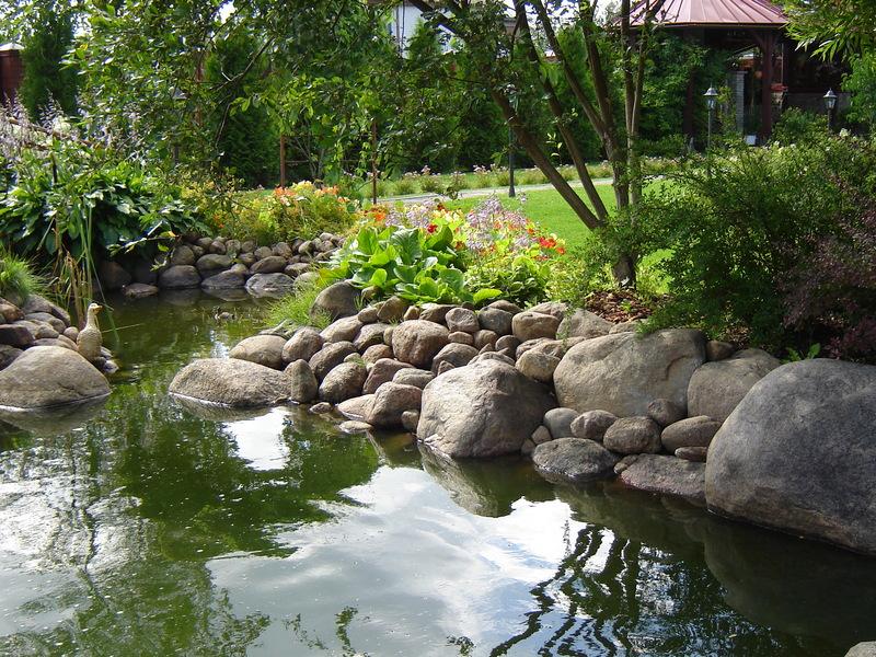 Украсят такой водоем и многие садовые растения, которые хорошо переносят избыточное увлажнение.