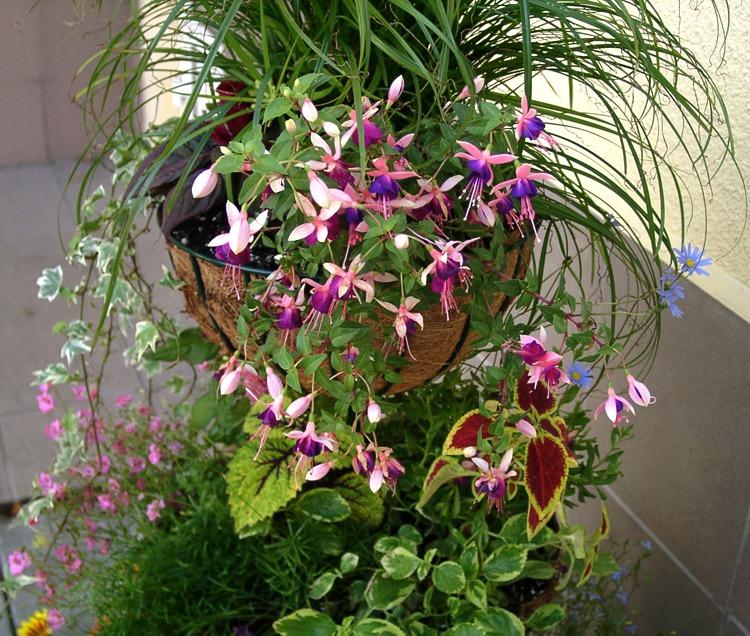 Фото и описание цветов в горшках 85